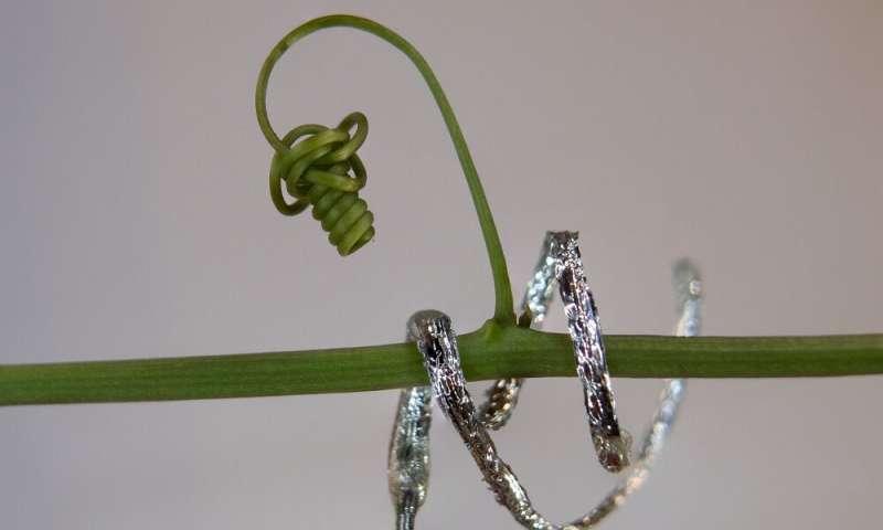 robot plantoidi